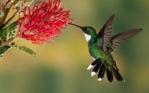 005 hummingbird