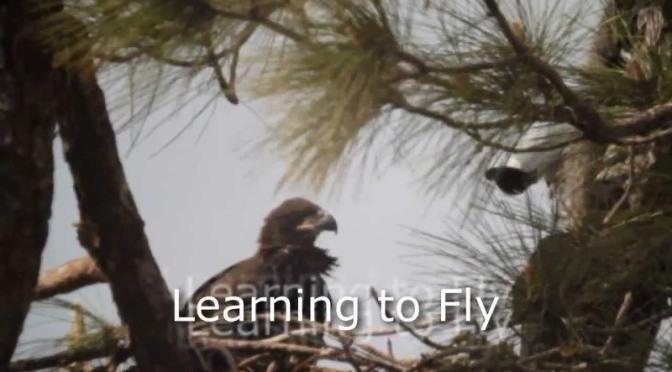Is God Stirring Your Nest?
